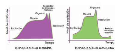 Orgasmo masculino - El orgasmo: diferencias entre