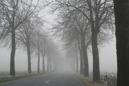 banco de niebla.jpg